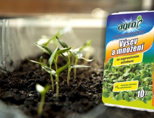 Jak a kde předpěstovat zeleninu a letničky